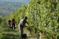 Italy's Marche Region + The Wonderful World of (La Staffa) Verdicchio, @ Rosemont, Mon., May 14, 6:00-7:30pm (1st event)